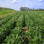Row Shaver Clean Rows After Use
